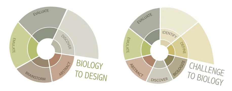 progetto biomimetico